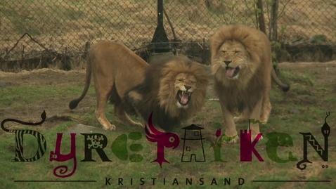 Thumbnail for entry Dyreparken - Trailer