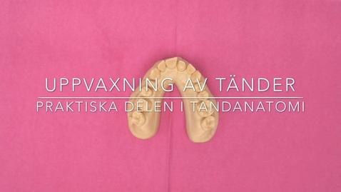 Thumbnail for entry Uppvaxning av tänder