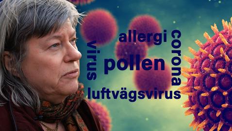 Miniatyr för inlägg Pollen ökar risken att drabbas av luftvägsvirus