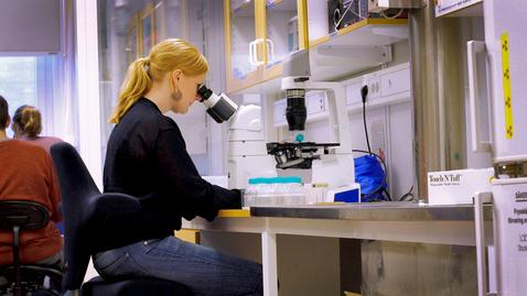 Tumnagel för Växtplankton som etablerar sig först slår ut konkurrerande bestånd