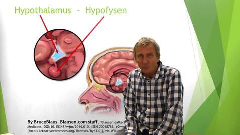 Miniatyr för inlägg Hormonsystemet del 2