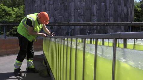 Thumbnail for entry Algoland – om mikroalgers potential att rena vatten och luft