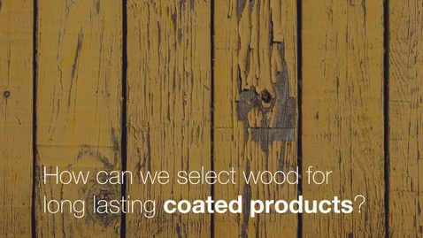 Miniatyr för mediepost Tinh´s research is about how to select wood for long lasting coated products