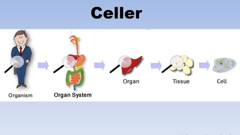 Miniatyr för inlägg Celler