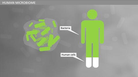 Thumbnail for entry BIOFILM - Planktonic and Biofilm Growing Bacteria